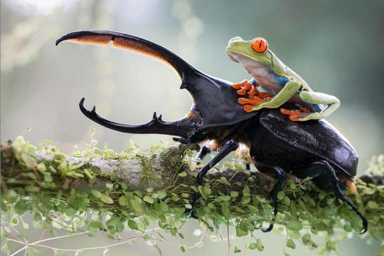 a frog on a beetle