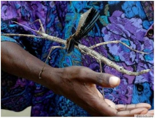 Jom Lihat Serangga-Serangga Terbesar Di Dunia