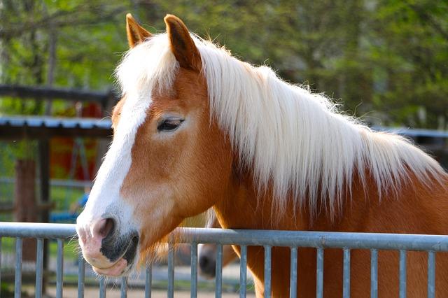 Maladies respiratoires du cheval