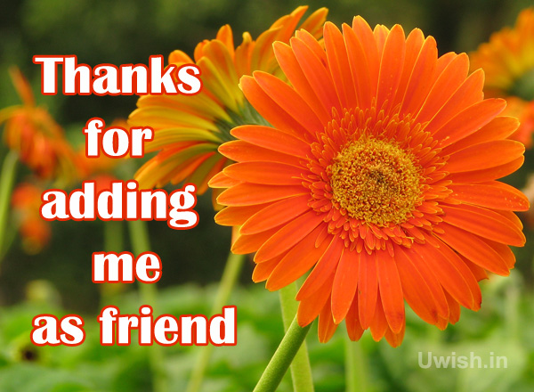 Thanks for adding me as friend with flowers e greeting cards and wishes