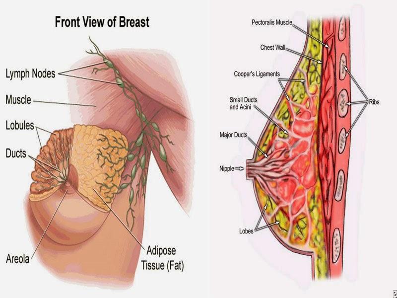 Bawang Berlian Obat Kanker Payudara Alami