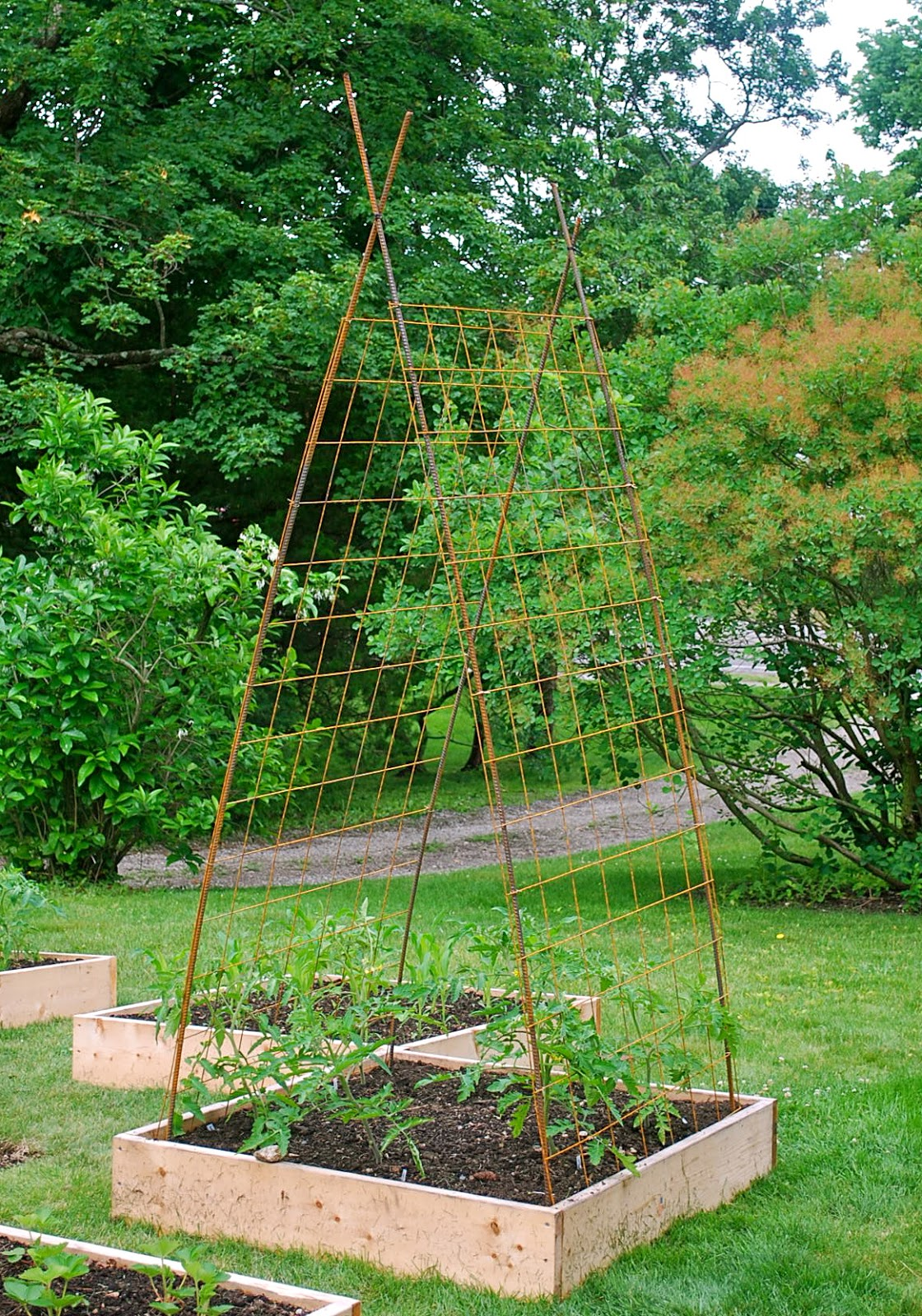 seeding the good life building tomato trellises from rebar and remesh i was leaning towards building homemade tomato cages out of concrete reinforcement wire as they seem to work for my fellow garden bloggers and are a