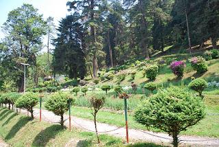 Botanical Gardens Darjeeling