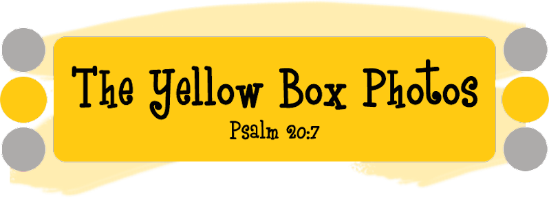 The Yellow Box Photos