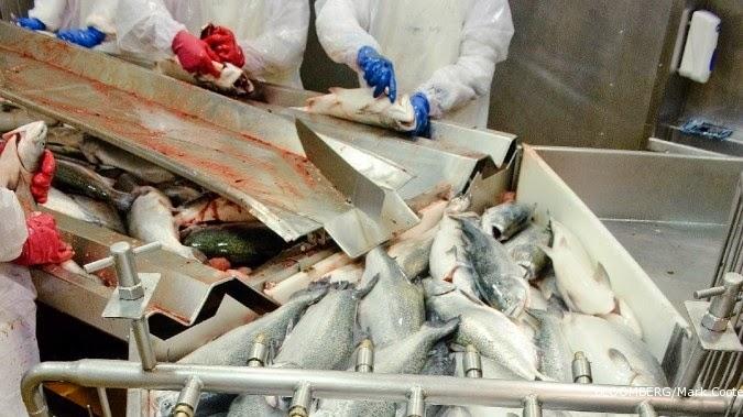 Potensi Perusahaan Pabrik Pengolahan Ikan Laut di Indonesia
