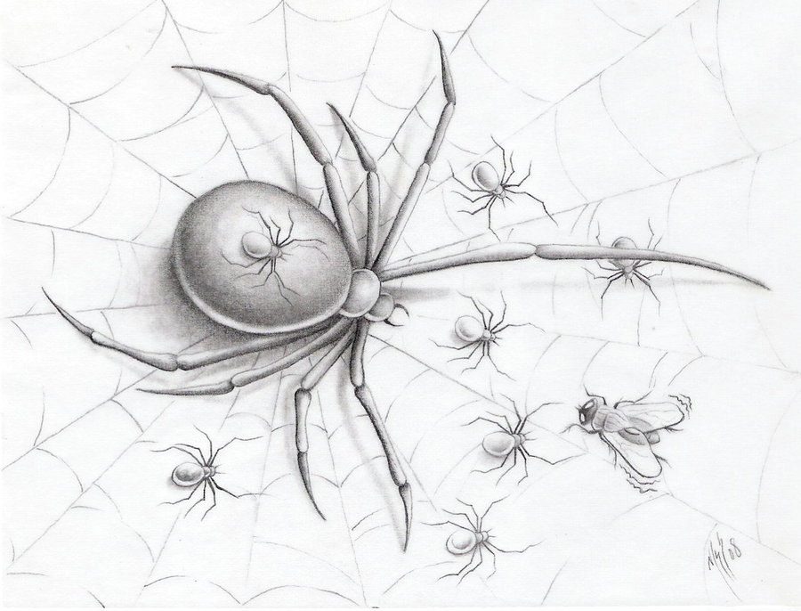 Tattoo Insights: Spider Tattoo Designs Photos 2012 New