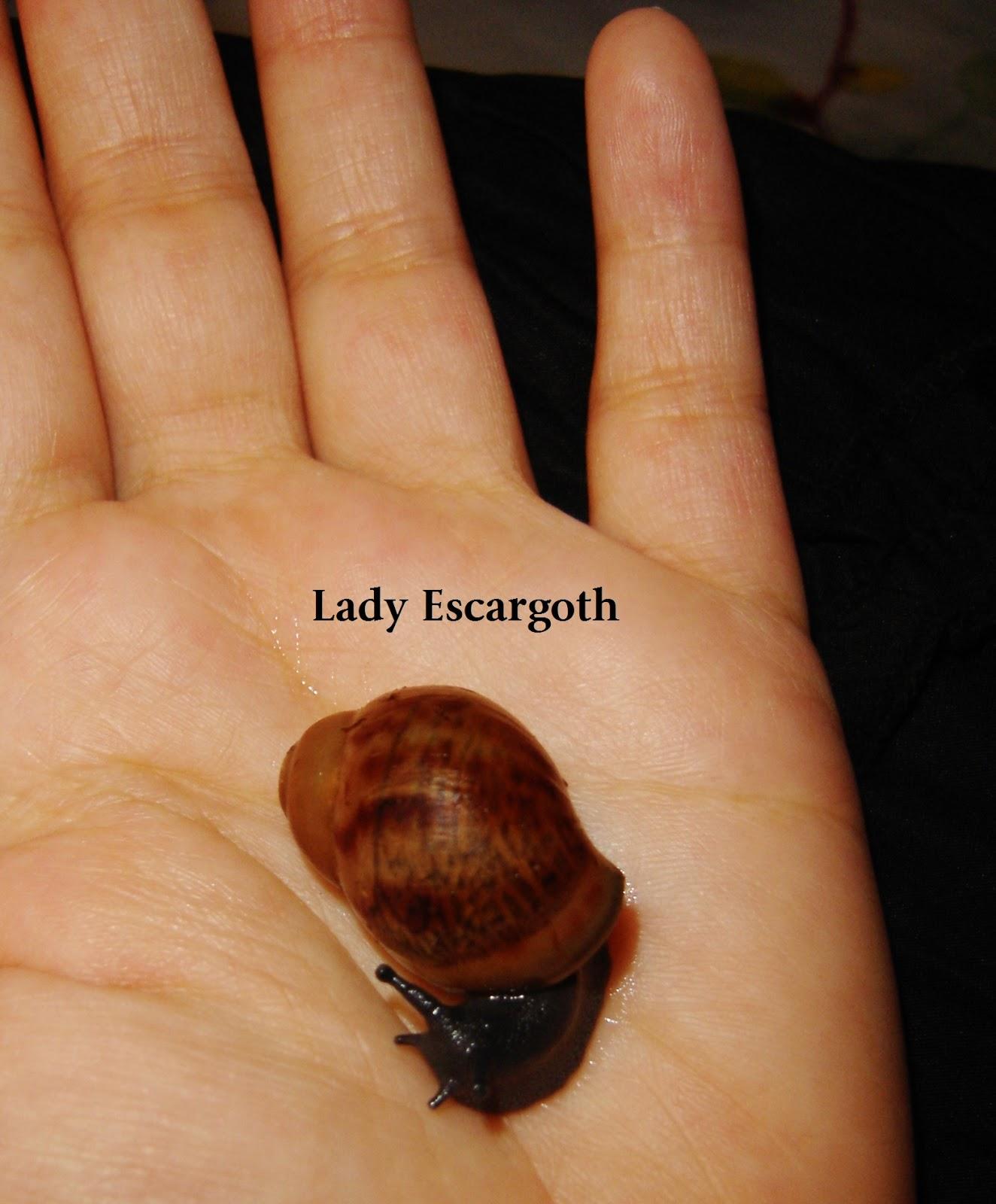 bébé escargot géant