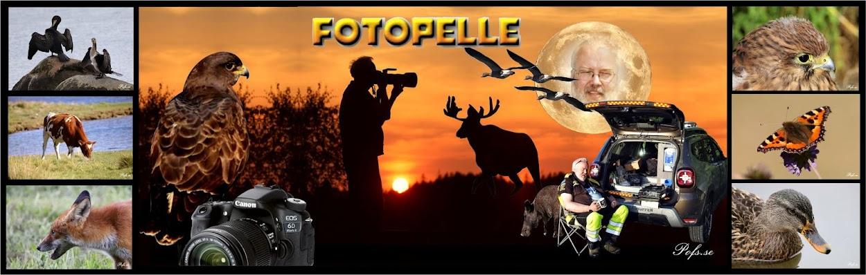 Pelles Fotoblogg