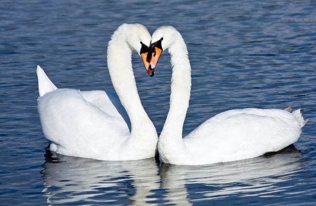 अध्यातम में हंस पक्षी का महत्तव