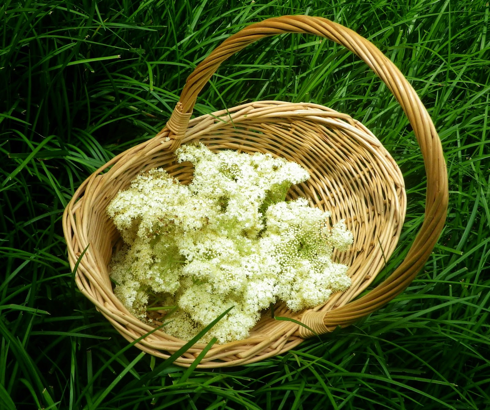 Elder flowers in basket - Laura Perry author editor artist