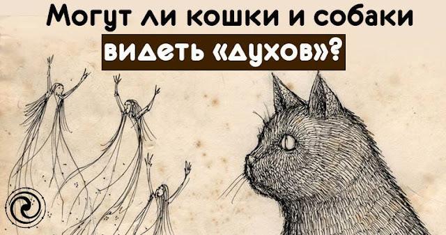 могут ли видеть коты духов составляется