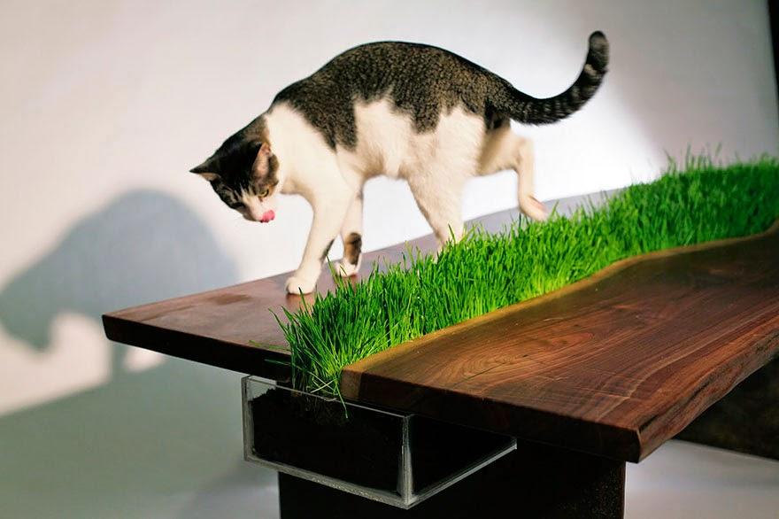Cat Friendly Table-2.bp.blogspot.com