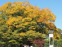 快晴の京都府立図書館の時計台。