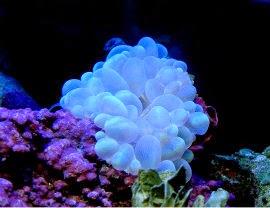 Burbujas de coral