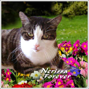 Nerissa