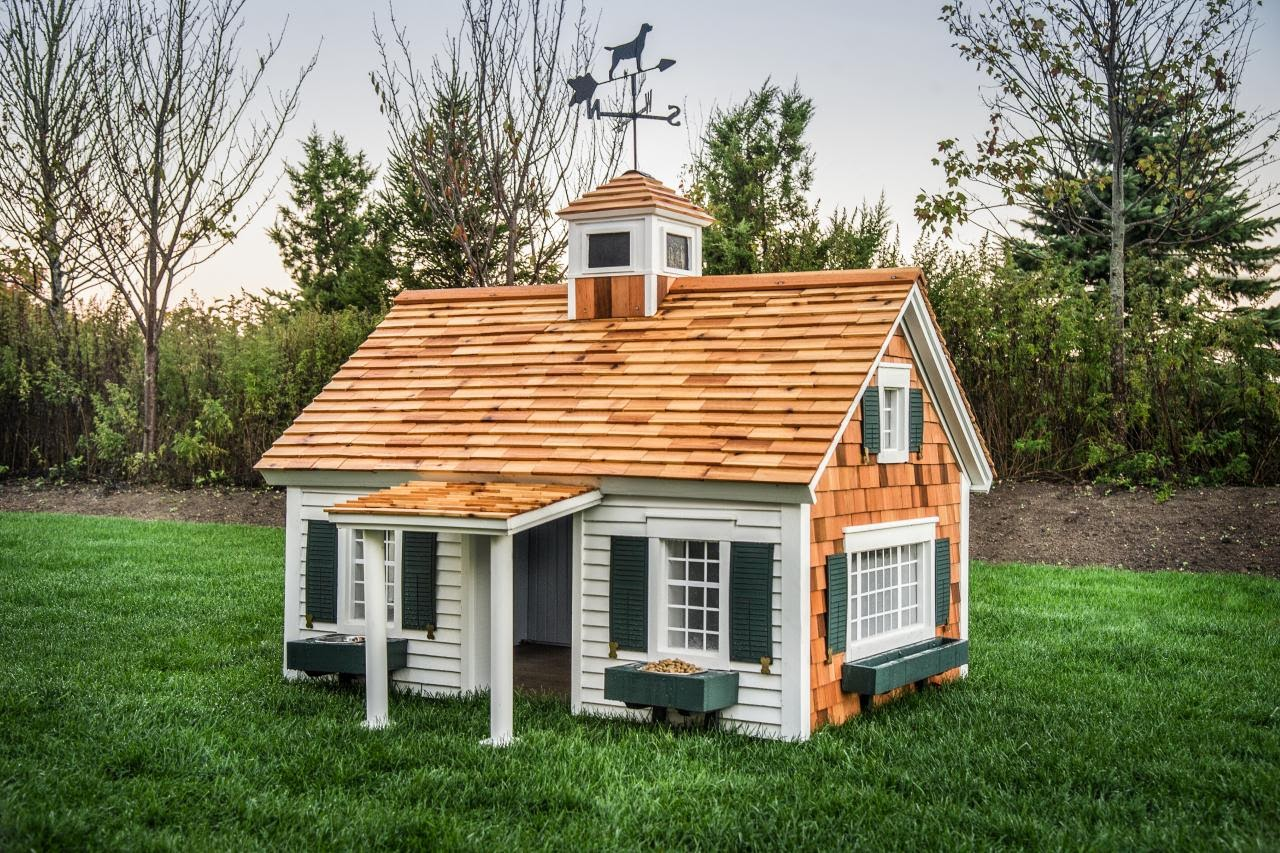 top backyard dog house architecture nice