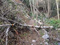 Tree fallen on Fish Canyon Trail, Angeles National Forest