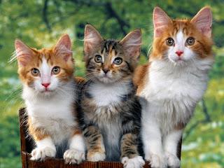 Kucing Menarik