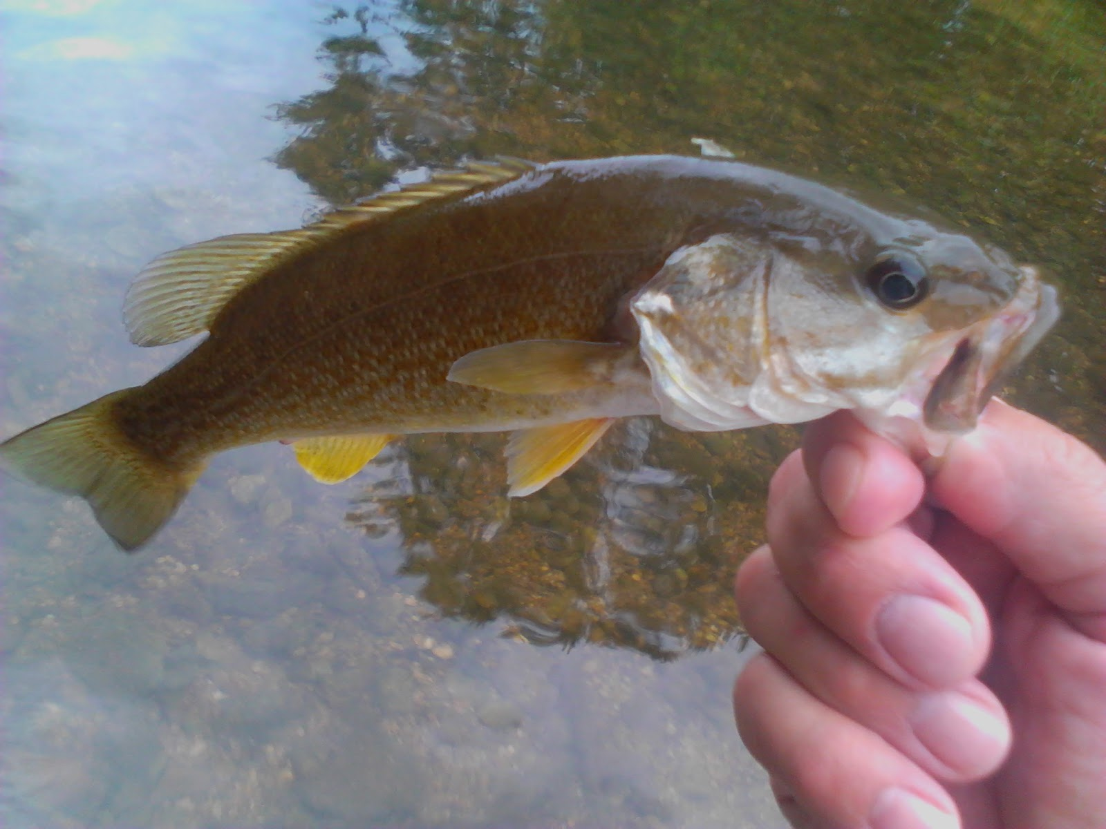 Buggin 39 out enjoying the day out fly fishing or spin rod for Fly fishing for bluegill
