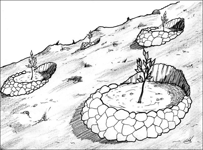 terrasas individuales
