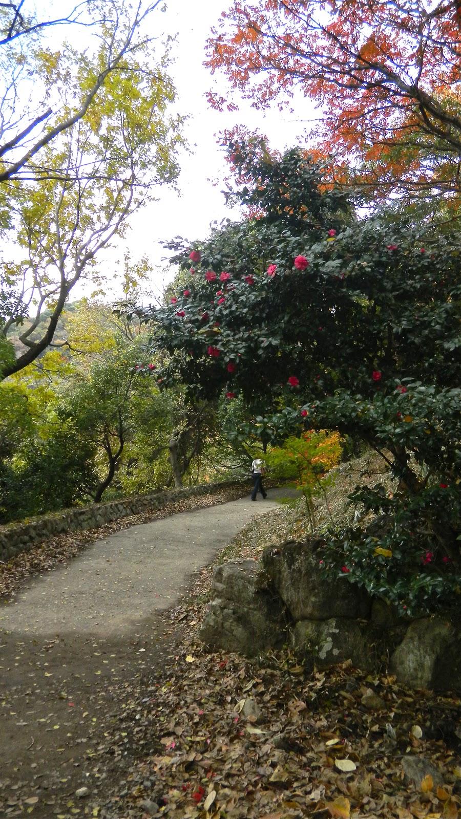 The Traveling Gardener January 2013