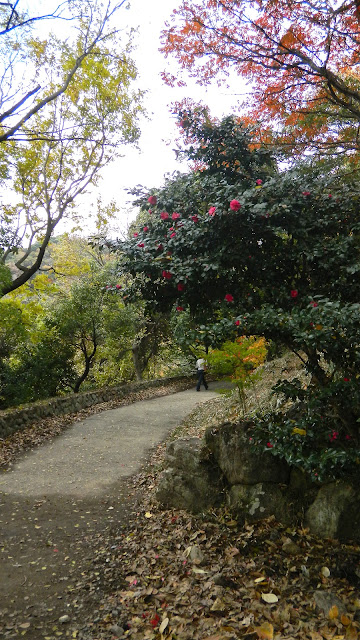 Camellia tree Kobe, Japan