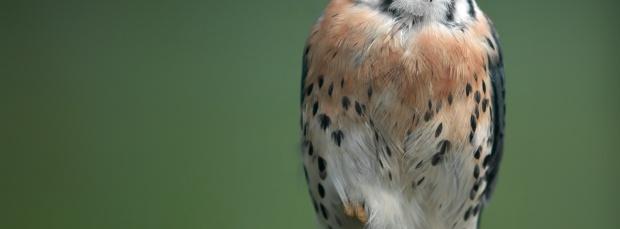 guzel kus facebook kapak resimleri+%252832%2529 35 En Güzel Facebook Kuş Kapak Resimleri indir