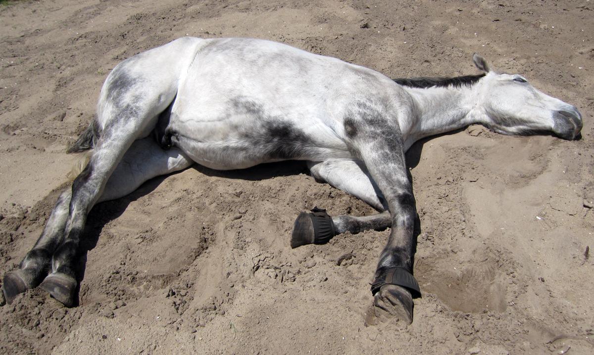 deadhorse.jpg
