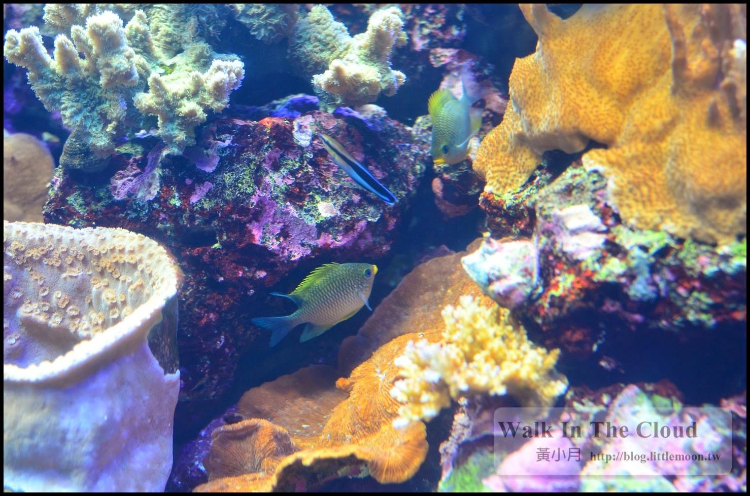 漂亮的珊瑚與海中生物