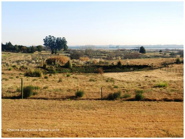 Los pastos están secos y el tajamar no recibe agua - Chacra Educativa Santa Lucía