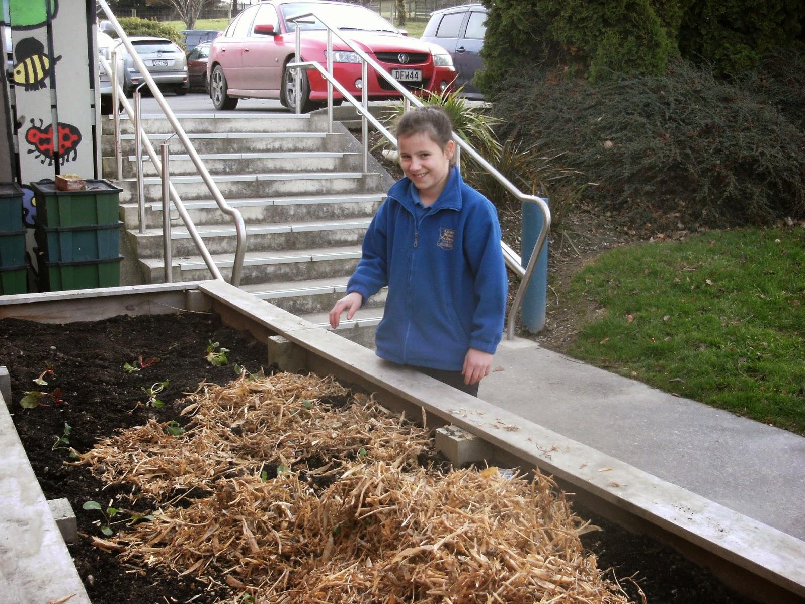 enviro group gore main preparing the garden for winter