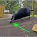 This Crows Stares At A Stick… 8 Moves Later? Scientists Are SHOCKED Beyond Belief!