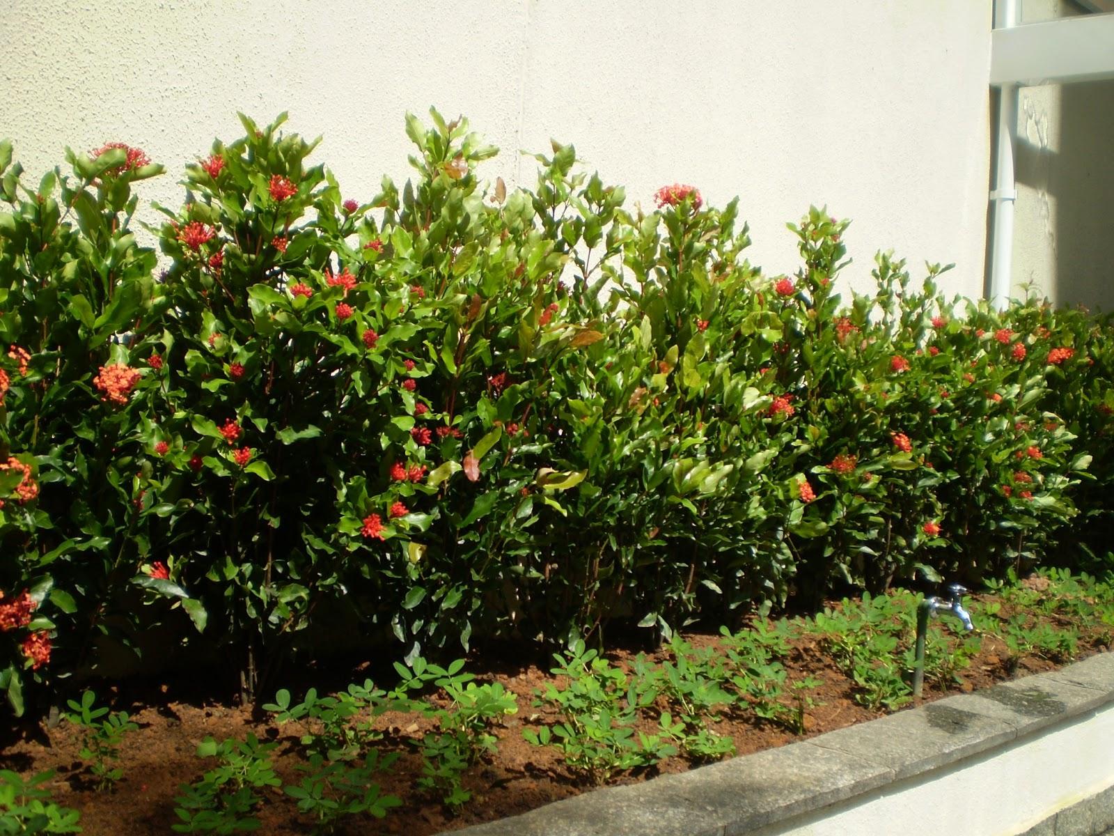 plantas para jardim altas:Nana Olivieri Paisagismo: Jardim recém implantado na área da