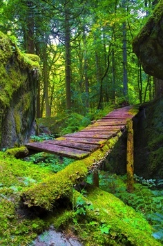 Forest Bridge Hope Columbia Canada
