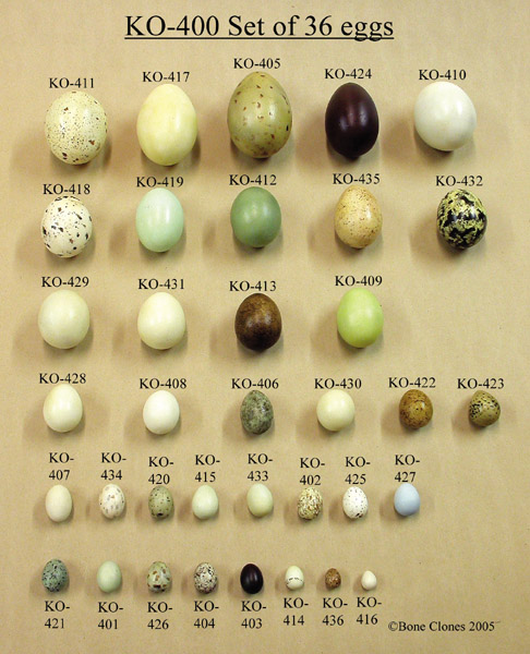 So why do we have brown white speckled blue etc colored eggs