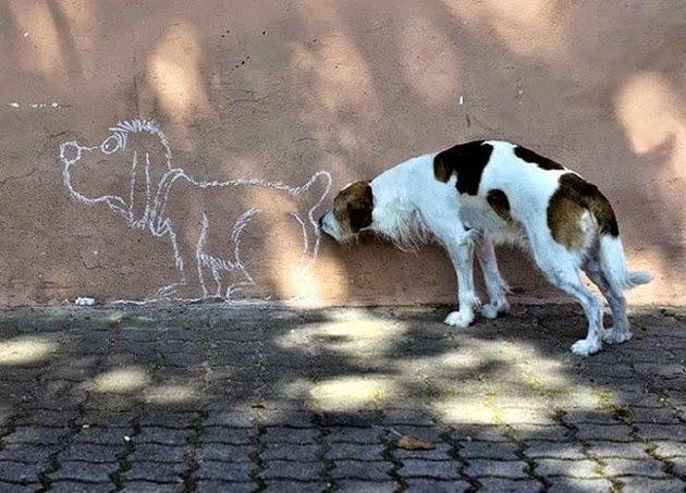 animal-photography-2