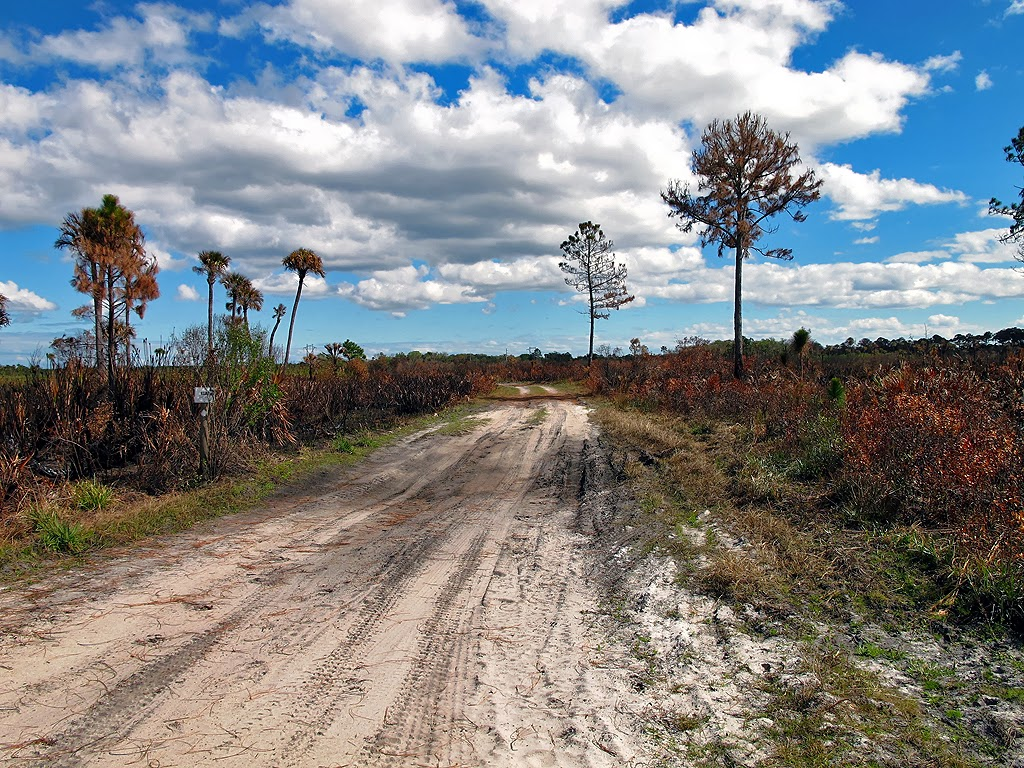 Florida Hikes And Other Outdoor Information Buck Lake