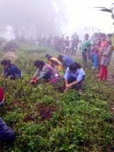 Kurseong College NSS students observed Van Mahatsav