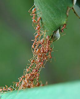 ants hormigas cooperacion altruismo filosofia biologia
