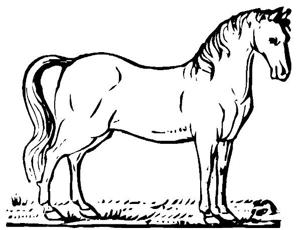 De caballos para dibujar faciles - Imagui