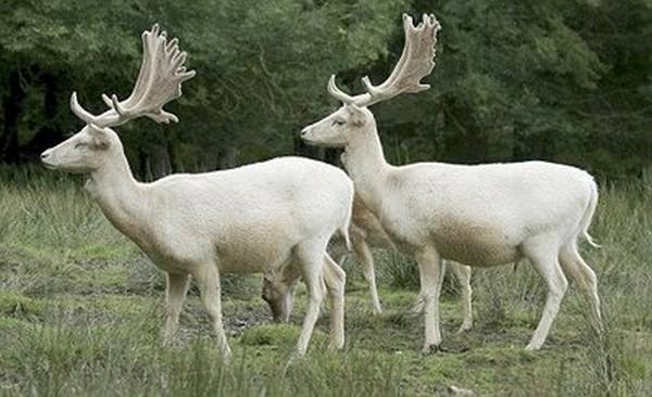 Animals- white edition
