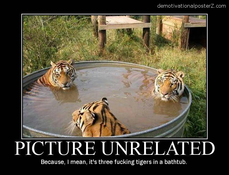 3 tigers in a tub funny motivational