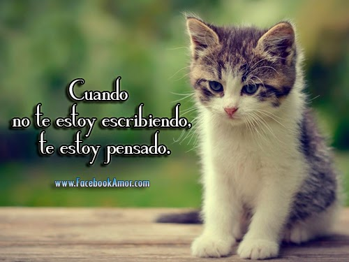 Imagenes bonitas de lindo gatito - Imágenes Bonitas para Facebook ...