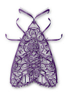 insects - illustrations