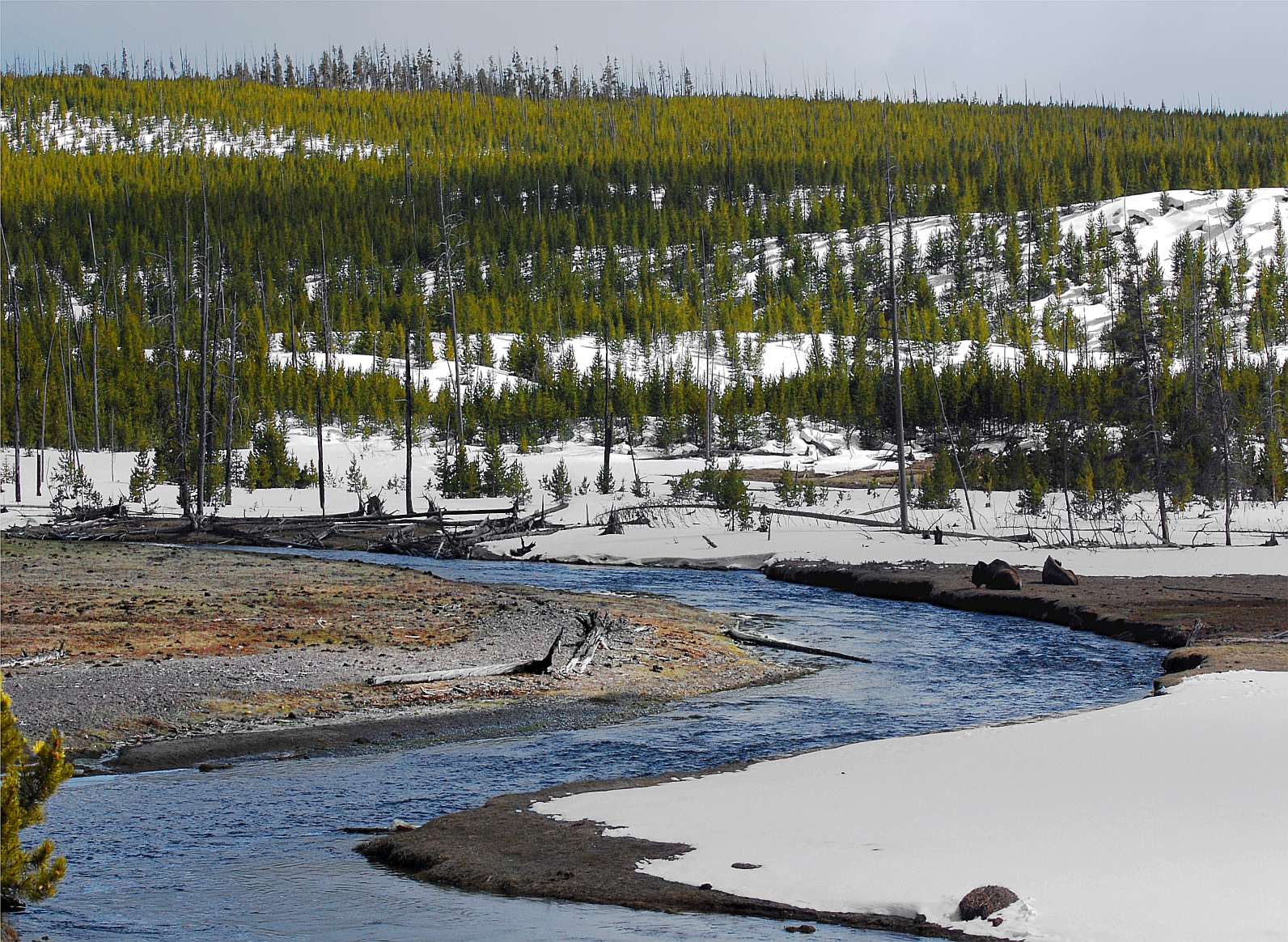 Fly fishing in yellowstone national park fishing weather for Fishing in yellowstone