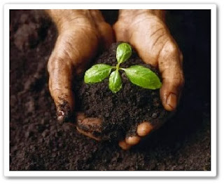 Сад и огород. Идеальная почва видео