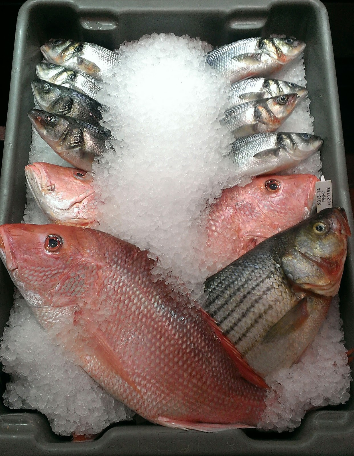 a dozen red and white fish in a tray of ice