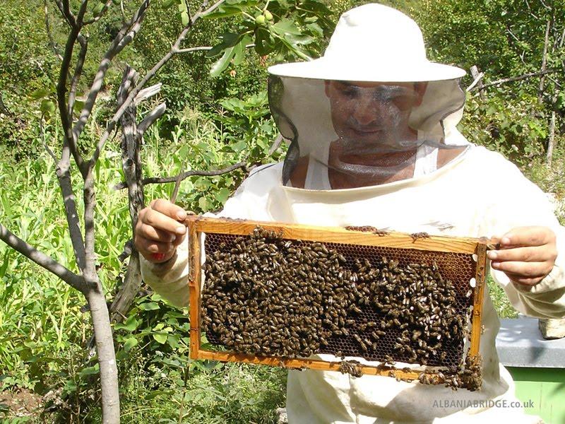 el problema de las ong: