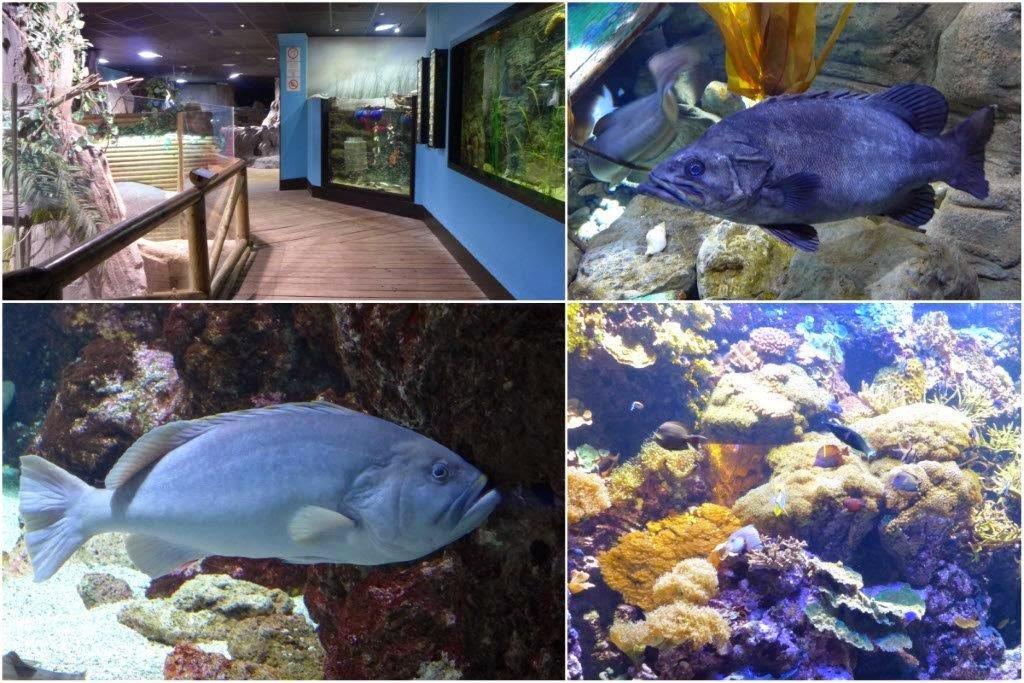 Instalaciones y peces en el Acuario de Gijon