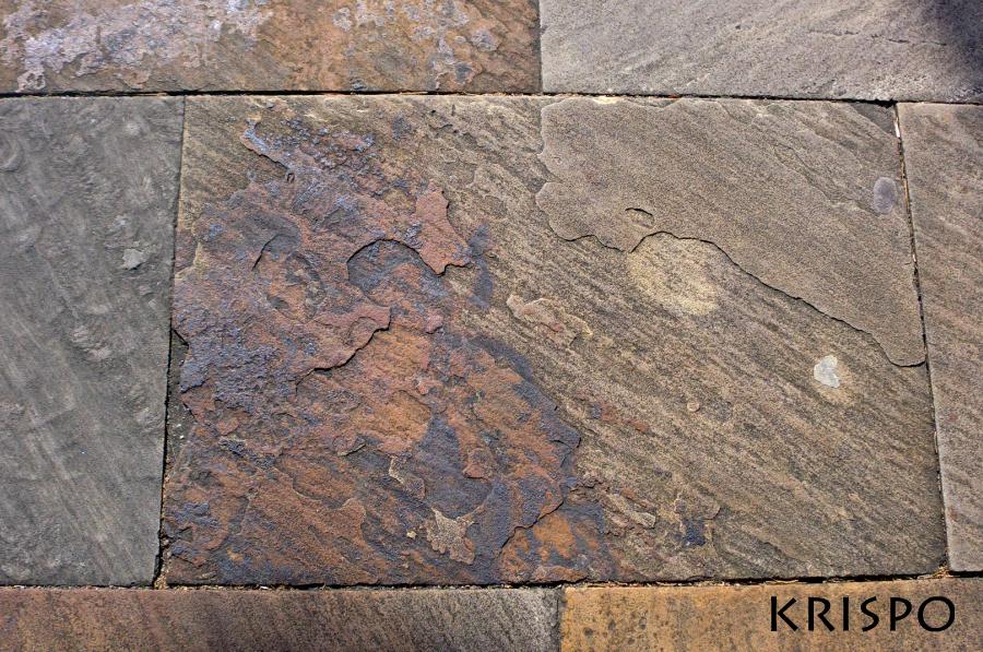 losa con fosiles vegetales y minerales
